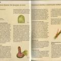 Игрушки из сена - Базовый курс 1